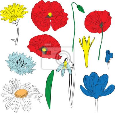 набор весенних цветов