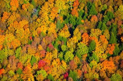 Картина Вид с воздуха осенью листвы в Вермонт.