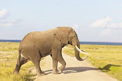 Картина Африканский слон в Кении
