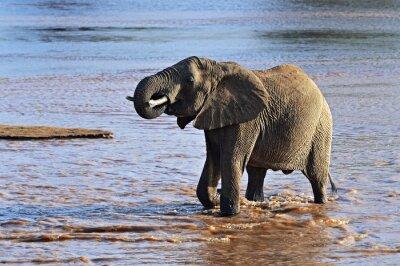 Картина Африканские слоны в саванне
