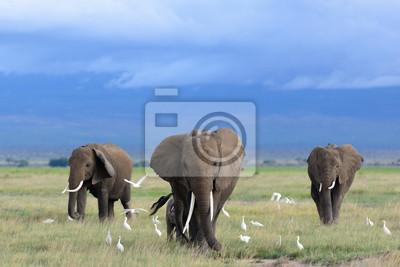 Картина African elephants / Kenya