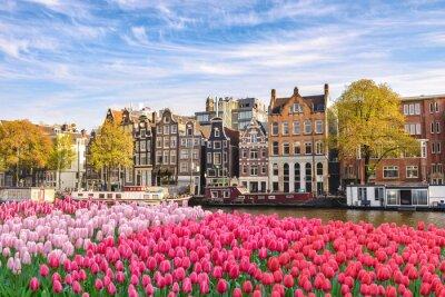 Картина Амстердам Нидерланды, город небоскребов Голландский дом на набережной канала с весенним тюльпаном