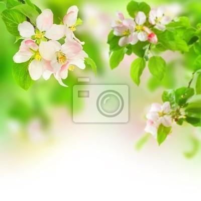 Картина Apple Blossom