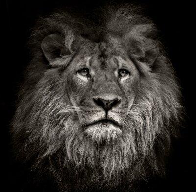 Картина высокомерным лев