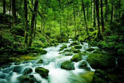 Картина Bach im Wald