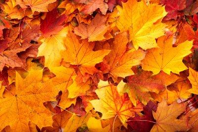 Справочная группа осенние листья оранжевый.