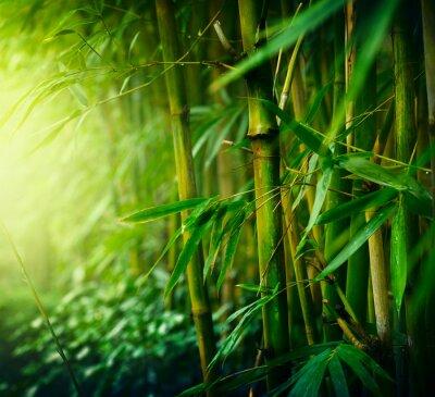 Картина Бамбук