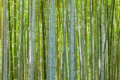Картина бамбуковый фон в природе в день
