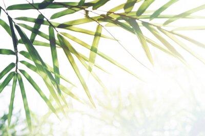 Картина Бамбук Лес или листва бамбука и солнечный свет и место для текста