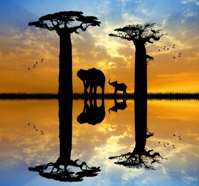 Картина Баобаб и слон на закате