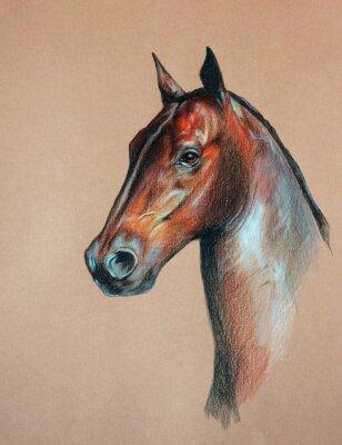 Картина гнедого коня голова