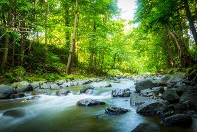 Картина Красивые мечтательный горный ручей в лесу