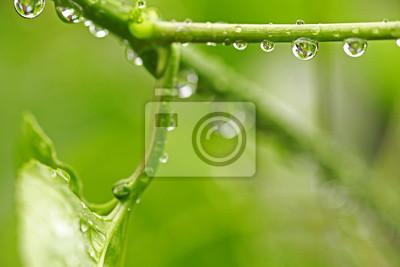 Картина Красивый зеленый лист с каплями воды
