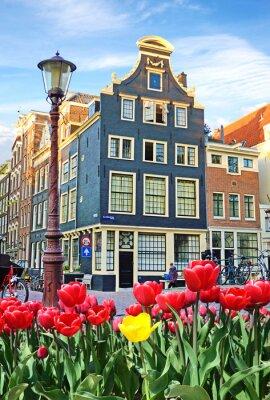 Картина Красивый пейзаж с тюльпанами и домов в Амстердаме, Голландия