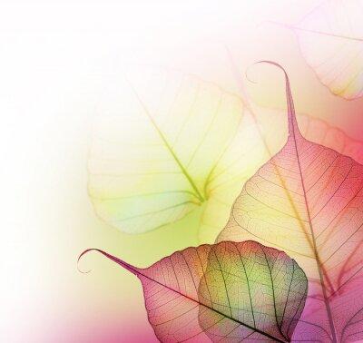 Картина Красивые Листья проектировать границу на белом