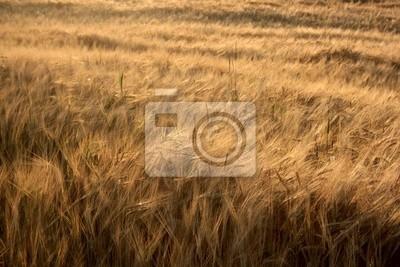 Красивая структура от культуры зерна