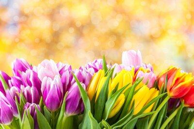 Картина Красивые тюльпан цветы