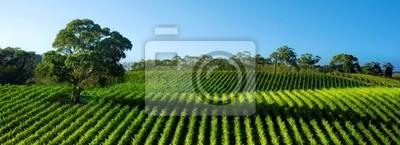 Красивая Виноградник Панорама с большой десен дерева