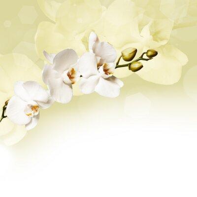 Картина Красивый белый орхидеи