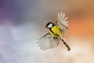 Картина птица птица муха размять крылья в небе на закате