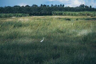 bird in a tall grass
