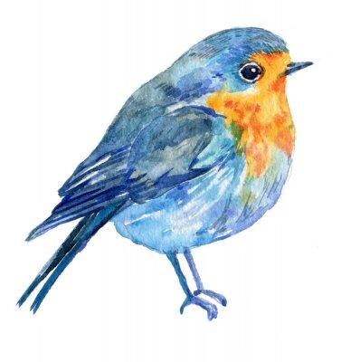 Картина птицы на белом фоне .illustration акварель