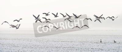 Картина Птицы летают над заснеженном поле в зимний период