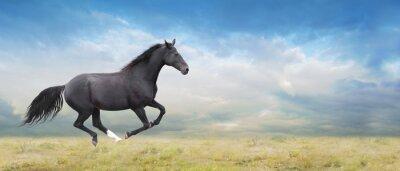 Картина Черный конь бежит галопом на поле