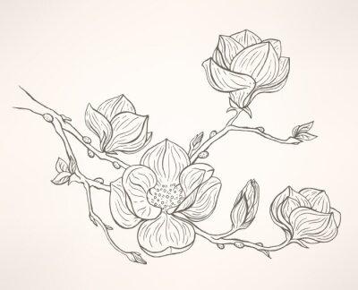 Картина цветущая магнолия