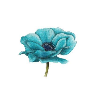 Картина Синий анемон