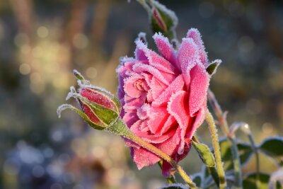 Картина цветы 529