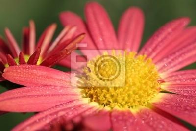 blumenblüte мит Wassertropfen