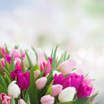 Картина букет из розовых, пурпурных и белых тюльпанов