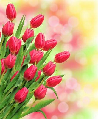 Картина Букет из розовых тюльпанов на ярком фоне природы