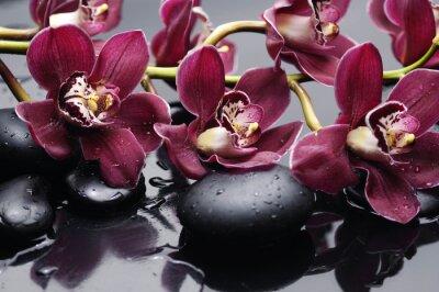 Картина филиал красные орхидеи с терапии камней