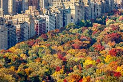 Картина Блестящие Осенние краски на Центральный парк листва в конце дня. Вид в сторону Центрального парка. Верхний Вест-Сайд, Манхэттен, Нью-Йорк
