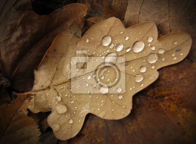 Коричневые осенние листья с каплями воды