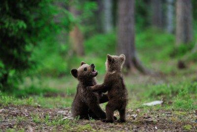 Картина Коричневые медвежата играют в лесу