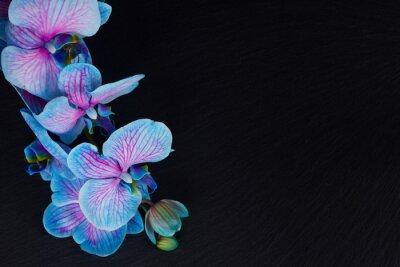 Картина Букет из фиолетовых орхидей