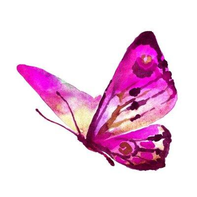 Картина бабочки дизайн