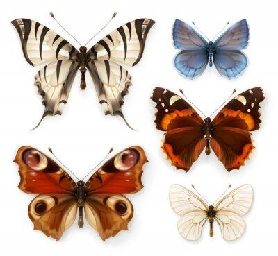 Картина Бабочки, набор векторных иконок