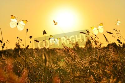 Картина Бабочка и лето луг