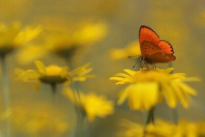 Картина бабочка в саду