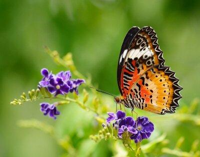 Картина Бабочка на фиолетовый цветок