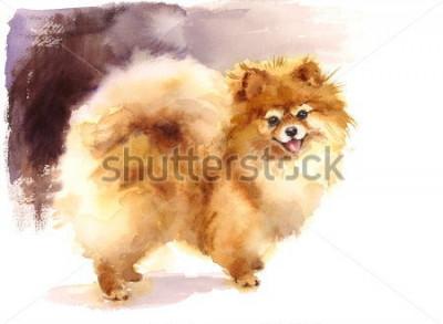 Картина Акварель Собака Померанский портрет Ручная роспись Симпатичные животные Животные Иллюстрация