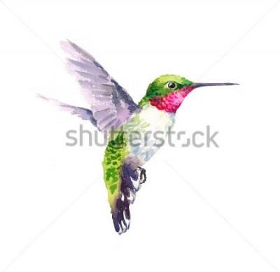 Картина Акварель Bird Hummingbird Летающая рука, рисованная Летний сад иллюстрации, доступны на белом фоне