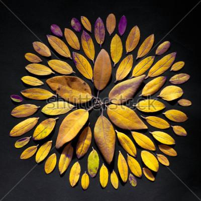 Картина Листья ручной работы лежат на черном фоне. Чешская мандала из листьев.