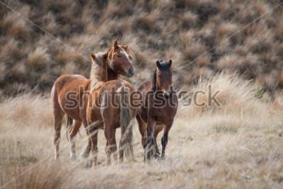 Картина Кайманова дикие лошади с ушами