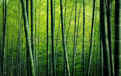 Картина Концепция природы бамбуковых лесных деревьев