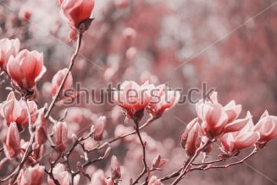 Картина Тенденция фотографии на тему нового цвета 2019 года - Живого Коралла. Цветки магнолии весны на естественной природе.